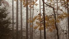Zaczyna się prawdziwy listopad. Weekend wietrzny i deszczowy