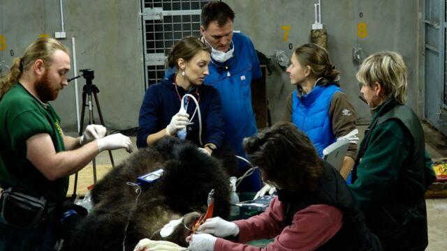 Jak wygląda udzielanie pomocy dzikim zwierzętom?