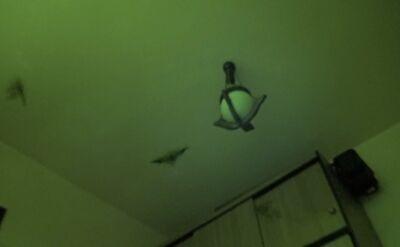 Do mieszkania wleciało kilka nietoperzy