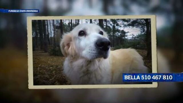 Piękna, szlachetna Bella