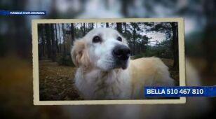 Łagodna, piękna spokojna Bella