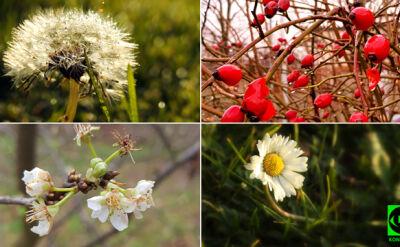 W kalendarzu grudzień, w ogrodach maj. Relacje Reporterów 24