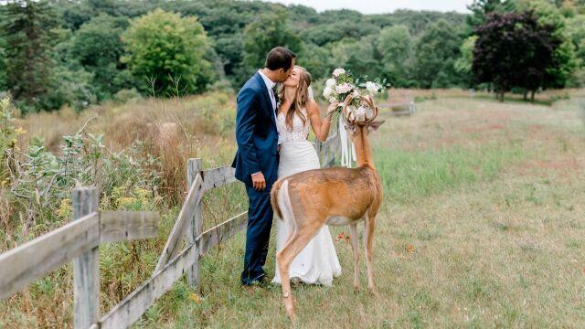 Nieproszony gość na ślubnej sesji zdjęciowej. Zjadł młodym bukiet