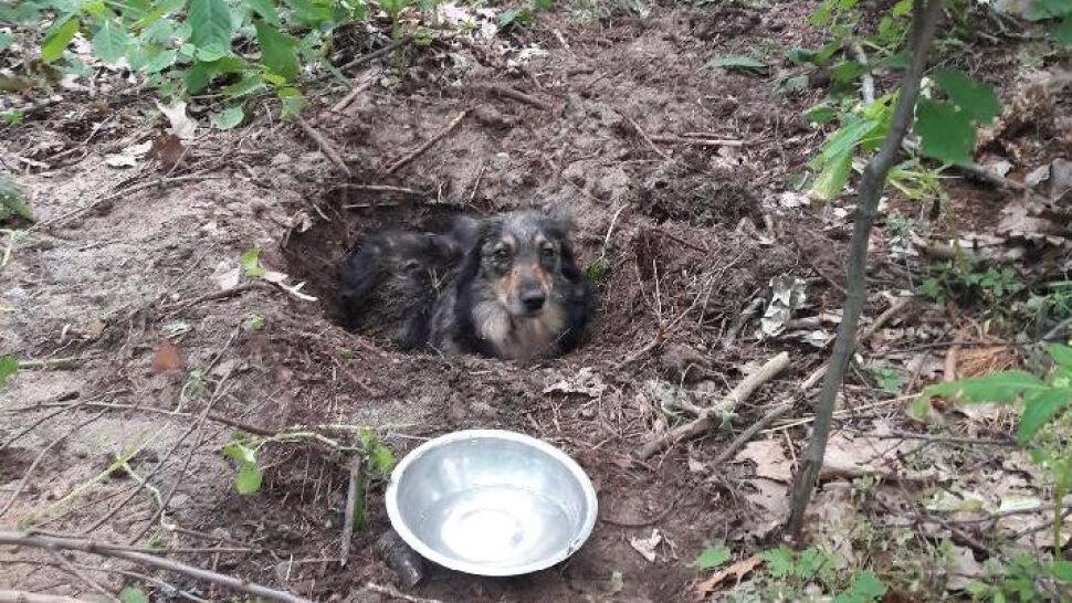 W lesie zakopał żywego psa. Usłyszeli piski i skomlenie. Właściciel zatrzymany