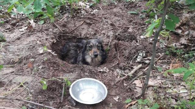 Słychać było piski i skomlenie.  W lesie zakopany był żywy pies