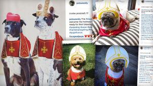 Psy w papieskich strojach.