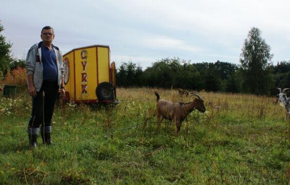 4 kozy, 2 owce, 2 kucyki...