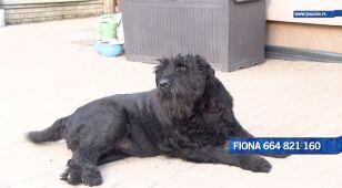 Fiona szuka nowego domu