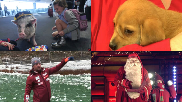 Pies z ogonem na czole czy pomocna świnka? Wybierz najciekawsze wideo tygodnia w tvn24.pl