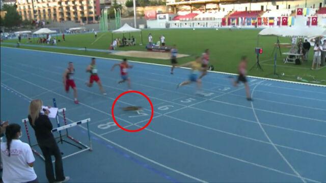 Sprinterzy pędzili z dużą prędkością. Przed metą pojawił się kot
