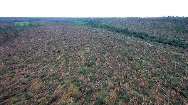 Hektary drzew połamanych jak zapałki. Film z drona