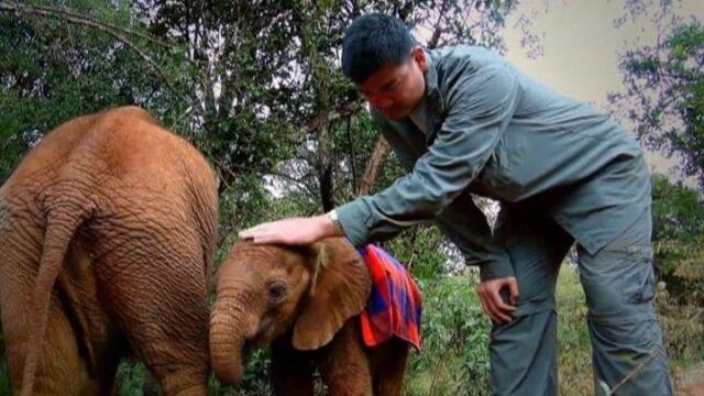 Chiński olbrzym staje w obronie słoni i wypowiada wojnę kłusownikom