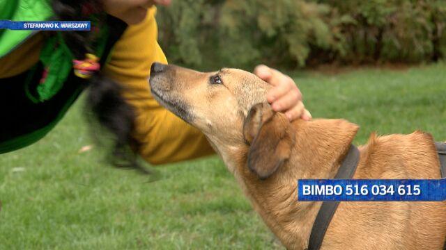 Bimbo czeka na nowy dom