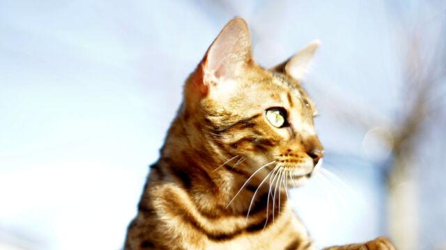 Kot Od Ponad Roku Nosi Prezenty Na Grób Pana