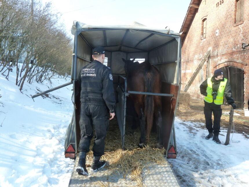 Zaniedbane zwierzęta mieszkały w gospodarstwie w Cielętniku pod Braniewem