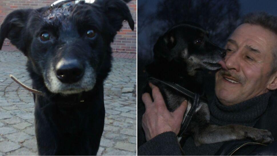 Bliskiego śmierci Tajsona znalazł Betis.  Ten, który skatował psa idzie do więzienia