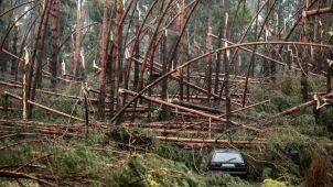 Blisko 50 tysięcy hektarów lasu zniszczonych.
