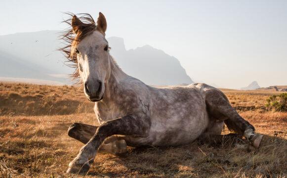 """Khotso"". Narodowy Park Sehlabathebe w Lesotho - Byron Inggs"
