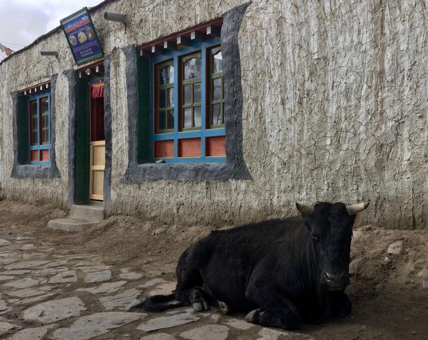 Życie w Mustangu nie jest rajskie, ale pełne harmonii i duchowości