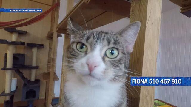 Fiona - energiczna kotka szuka domu