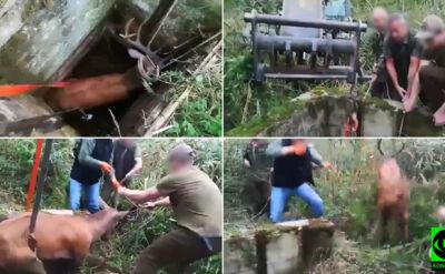 Wpadł do studni, nie mógł się wydostać. Jelenia uratowali dwaj bracia
