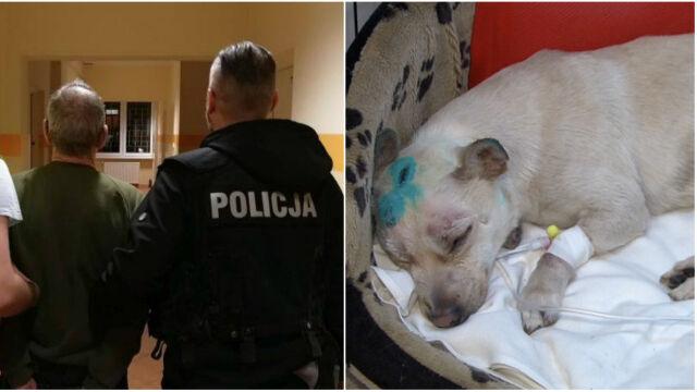 """""""Skatował psa i wrzucił w torbie do śmietnika"""". Sąd nie zgodził się na areszt dla 63-latka"""