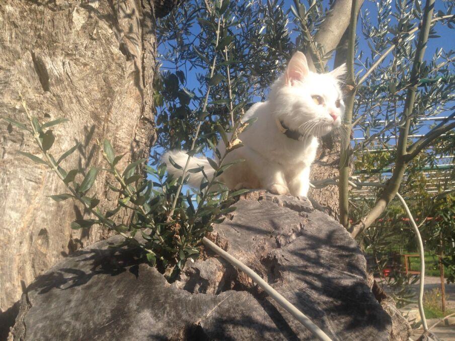 Kunkush eksploruje Lesbos
