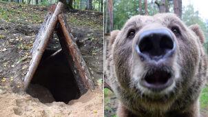 Baloo nie ma pazurów, ale wykopał sobie gawrę. Zoo: jesteśmy zaskoczeni