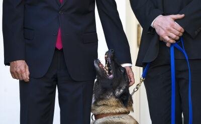 """""""Prawdopodobnie najbardziej znany pies świata"""" w Białym Domu"""