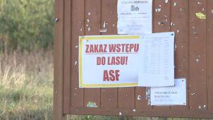 Afrykański Pomór Świń w Zielonej Górze. Zakazano wchodzenia do lasów