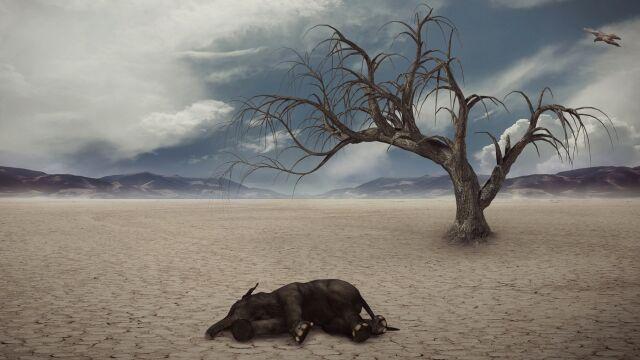 W ciągu ostatnich 500 lat wyginęło  co najmniej 80 gatunków ssaków