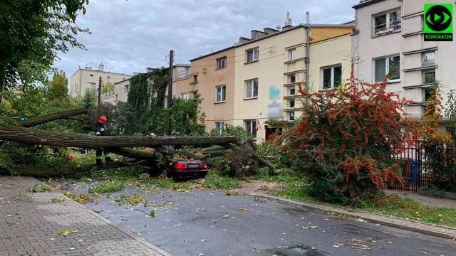 Połamane drzewa, przywalone samochody