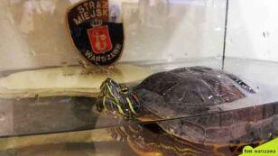 """Chciał powędkować w samotności. Dołączył do niego żółw. """"Miał pogodne usposobienie"""""""