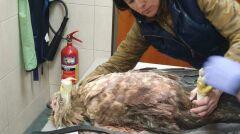 Marzena Białowolska opiekuje się dzikimi zwierzętami
