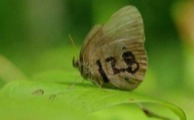 Motyle pod opieką amerykańskich marines