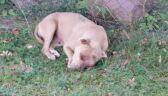 Prace społeczne za skatowanie psa