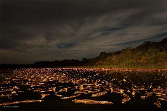 'Caiman Night' Luciano Candisani, Brazylia