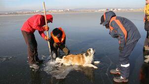 Pies utknął na zamarzniętym jeziorze.  Nagranie niezwykłej akcji ratowników