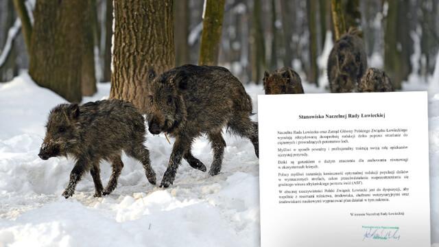 Naczelna Rada Łowiecka przedstawiła stanowisko w sprawie odstrzału dzików