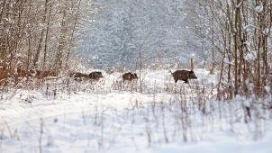 Gdzie odbędą się polowania?
