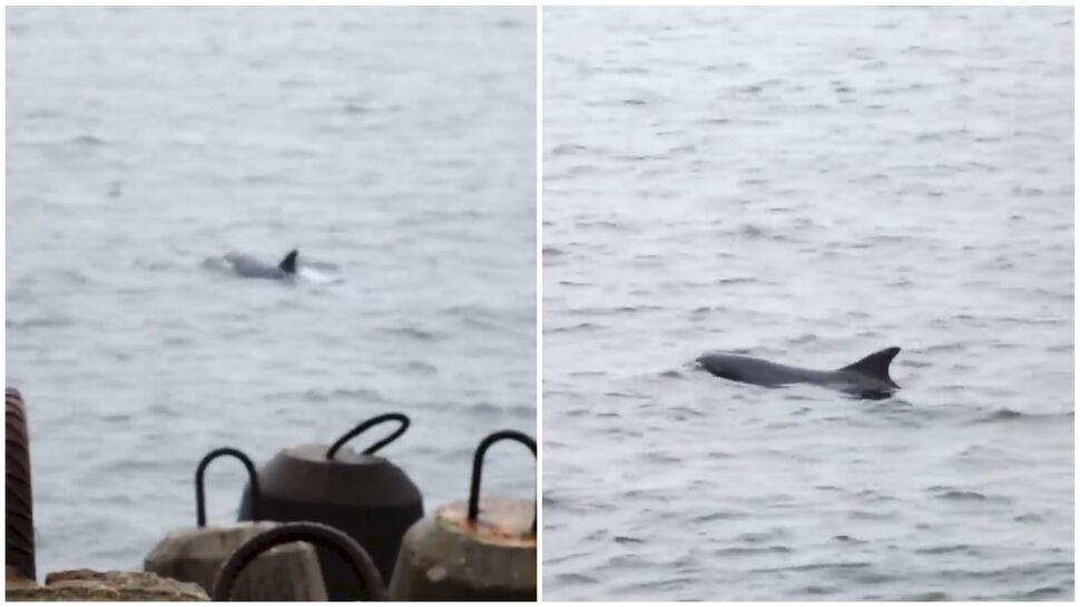 """Do Władysławowa przypłynął tajemniczy gość. """"Rekin, wieloryb, a może przerośnięty dorsz"""""""