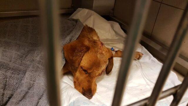 Skatowany i zakopany żywcem pies. Wyznaczono nagrodę za wskazanie oprawcy Oliego