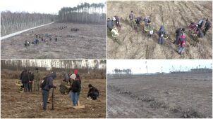 Wichura zmiotła drzewa, studenci sadzą nowy las