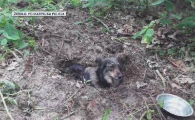 Polish man who buried his dog alive detained by the police