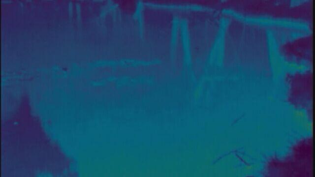 Nietoperze nad jeziorem (nagranie bez dźwięku)