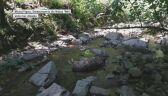 Wilk znaleziony w potoku w Beskidzie Śląskim