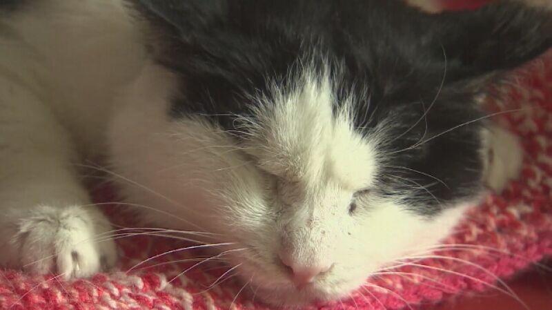 Historia Bohuna, kota z Ukrainy