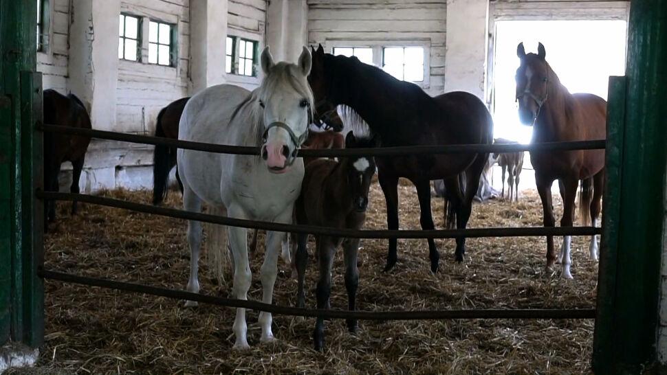 Zamieszanie wokół stadniny w Janowie Podlaskim. Minister rolnictwa: konie są zadbane