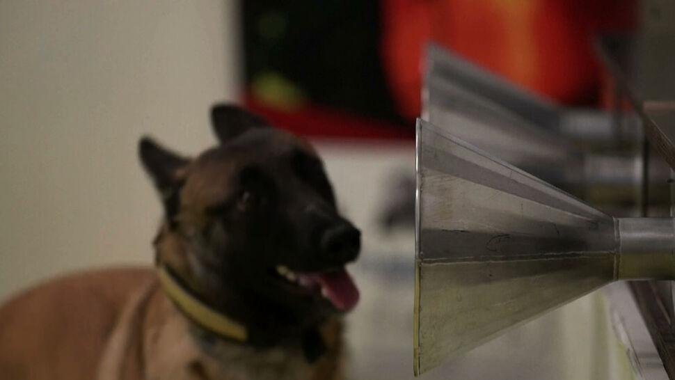 Psy mogą rozpoznać SARS-CoV-2? Brytyjczycy ruszyli z testami