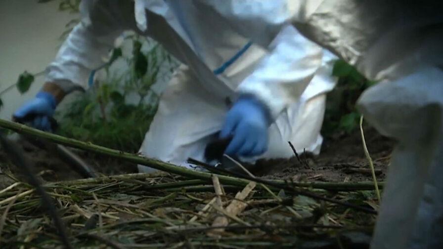 Zagadka z Archiwum X rozwiązana? W ogrodzie znaleziono zakopane ludzkie szczątki